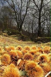 autunno roccabruna cn